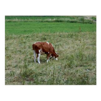 Carte Postale Vache dans le pâturage