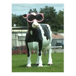 Carte Postale vache fraîche 1
