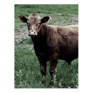 Carte Postale Vache seule