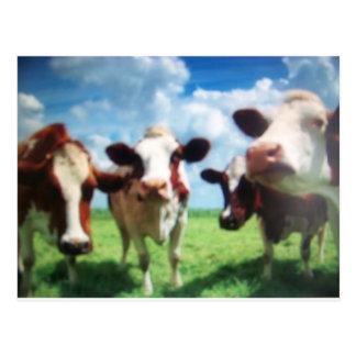 Carte Postale vaches