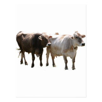 Carte Postale Vaches à Suisse de Brown