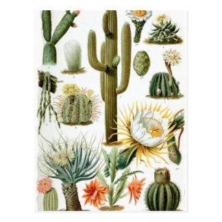Carte Postale Various_Cactaceae