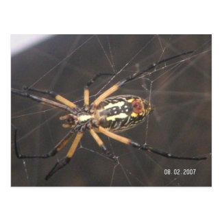 Carte Postale Ventre d'araignée de jardin