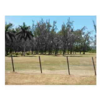 Carte Postale Verdure luxuriante de Montego Bay Jamaïque