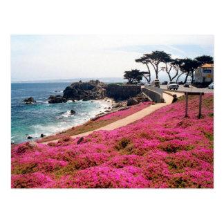 Carte Postale Verger-Monterey Pacifique Calif