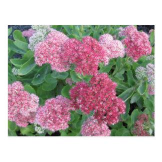 Carte Postale Vert de rose d'usine de jardin de floraison de