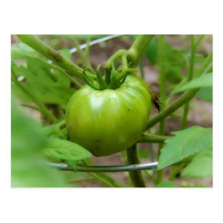 Carte postale verte du pays de tomates