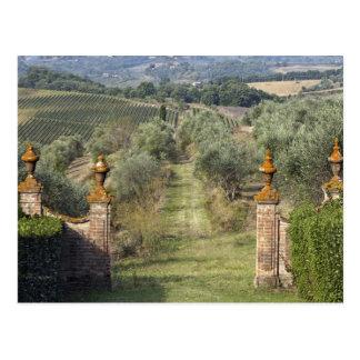 Carte Postale Vignobles, Toscane, Italie