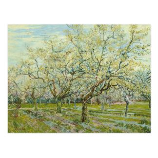 Carte Postale Vincent van Gogh - le verger blanc