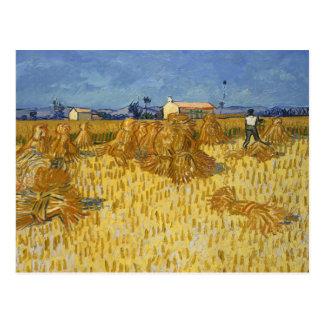 Carte Postale Vincent van Gogh - récolte de maïs en Provence