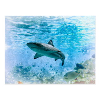 Carte postale vintage de requin