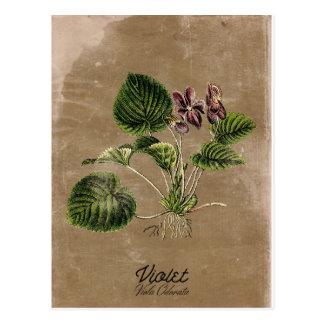 Carte postale vintage de violette de style