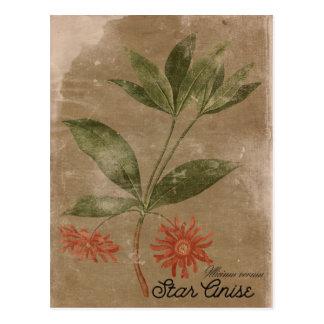 Carte postale vintage d'herbe d'Anis d'étoile de