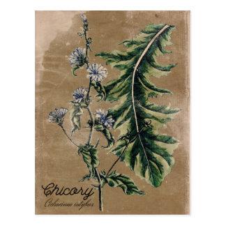 Carte postale vintage d'herbe de chicorée de style