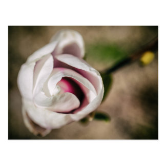 Carte Postale Vintage Magnolia