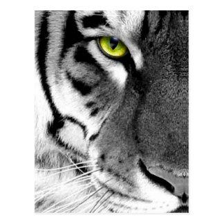 Carte Postale Visage de tigre - tigre blanc - tigre de yeux -