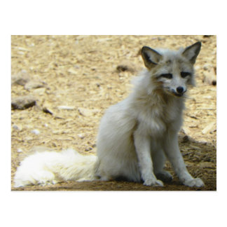 Carte Postale Visite veneze la faune @ Bearizona aujourd'hui