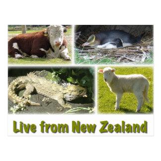 Carte Postale Vivez de Nouvelle Zélande