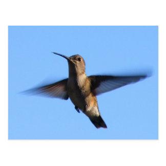 Carte Postale vol du colibri 3aJ dans un ciel bleu