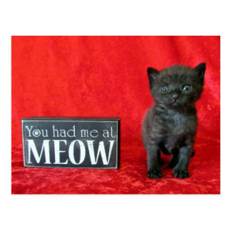 Carte Postale Vous m'avez eu au Meow - poivrez (aka dragée à la