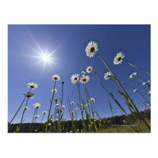 Carte Postale Vue d'angle faible des fleurs et du rayon de