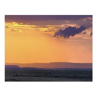 Carte Postale Vue panoramique d'arbre simple d'acacia à