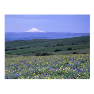 Carte Postale WA, le comté de Klickitat, ranch de montagne de