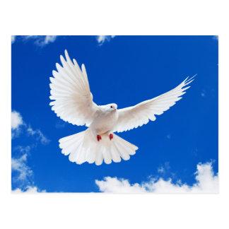 Carte Postale White Dove