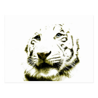 Carte Postale Yeux bleus, tigre blanc