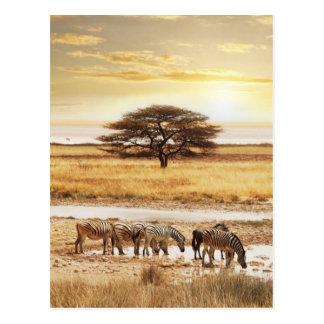Carte Postale Zèbres dans la prairie