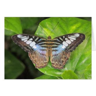 Carte pour notes bleu de papillon de tondeuse