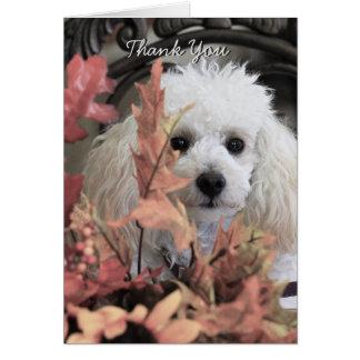Carte pour notes de chien de caniche de Merci