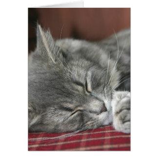 Carte pour notes faisant une sieste de chat tigré
