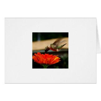 Carte pour notes Throated rouge de colibri