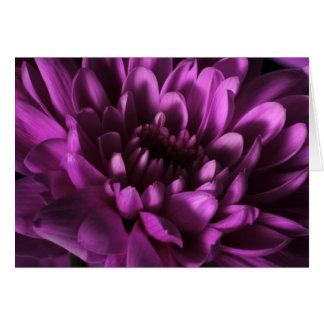 Carte pourpre de chrysanthème