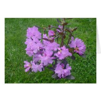 Carte pourpre de rhododendron