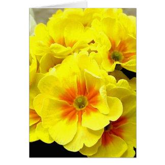 Carte Primevère jaune dans le printemps