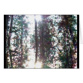 Carte Réflexion 2 de forêt