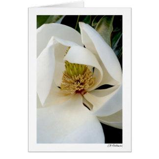 Carte Remous de magnolia