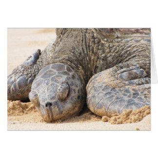 Carte Repos de tortue de mer