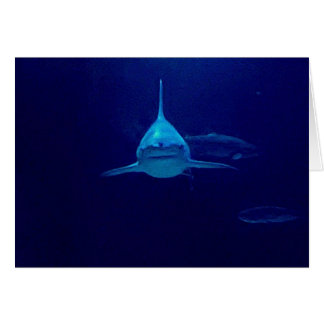 Carte Requin