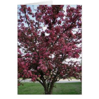 Carte Ressort de fleurs de pomme sauvage