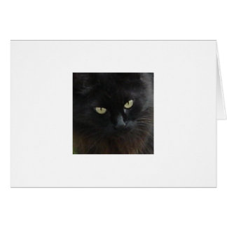 Carte Rêves de chat noir - Mijo