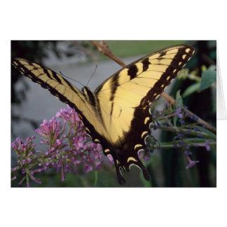 Carte Rêves de papillon