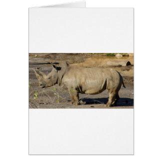 Carte Rhinocéros