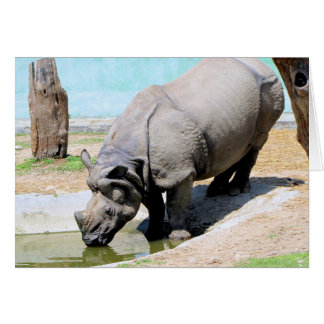Carte Rhinocéros au zoo de Katmandou Népal