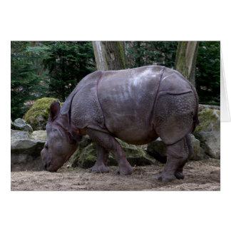 Carte Rhinocéros indien