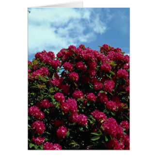 Carte Rhododendron