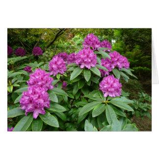 Carte Rhododendron Ponticum