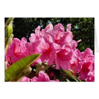 Carte Rhododendron rose-foncé